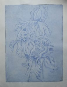 Iris Trio, blue, 2018
